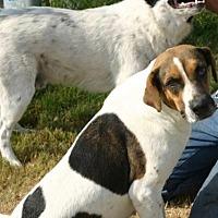 Adopt A Pet :: Koonie - Quinlan, TX