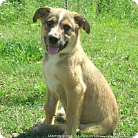 Adopt A Pet :: SPENCER/ADOPTED - PRINCETON, KY