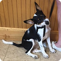 Adopt A Pet :: Holiday - South Dennis, MA