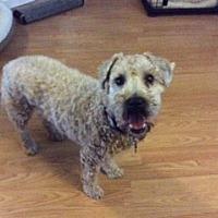 Adopt A Pet :: Taffy - Cambridge, ON