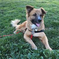 Adopt A Pet :: Oscar Isaac - Redmond, WA
