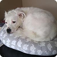 Adopt A Pet :: Elsa - Livonia, MI