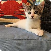 Adopt A Pet :: Kaia - Orlando, FL