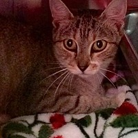 Adopt A Pet :: Flitter - Loudon, TN