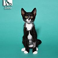 Adopt A Pet :: Luna - Tomball, TX