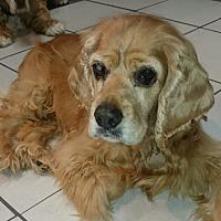 Adopt A Pet :: Naomi Grace - Sugarland, TX