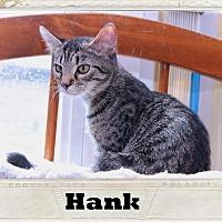 Adopt A Pet :: Hank - Media, PA