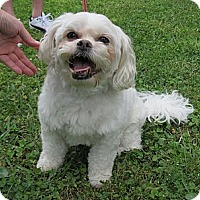 Adopt A Pet :: Bert - Kingwood, TX