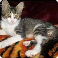 Adopt A Pet :: Einstein - Modesto, CA