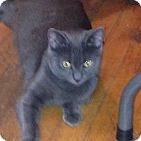 Adopt A Pet :: Debra - Randallstown, MD