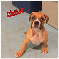 Adopt A Pet :: Chilie - Plainfield, IL
