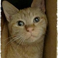 Adopt A Pet :: Pullus - Pueblo West, CO