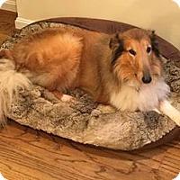 Adopt A Pet :: Peggy Sue - Powell, OH