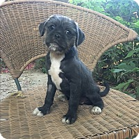 Adopt A Pet :: Dusty & Digby - Van Nuys, CA