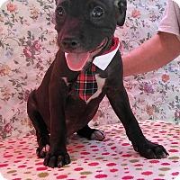 Adopt A Pet :: Jamie - Toms River, NJ