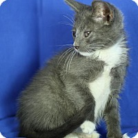 Adopt A Pet :: Snickers - Winston-Salem, NC