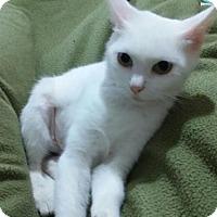 Adopt A Pet :: Violet - New Martinsville, WV