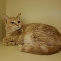 Adopt A Pet :: Mercedes - Elyria, OH