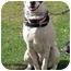 Photo 3 - Dalmatian/Pointer Mix Puppy for adoption in Mandeville Canyon, California - Smokey
