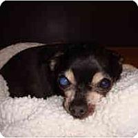Adopt A Pet :: Janus - Madison, WI