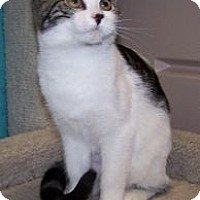 Adopt A Pet :: K-Psyche2-Blaze - Colorado Springs, CO