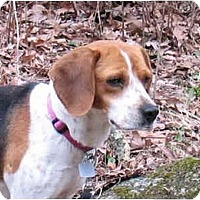 Adopt A Pet :: Henrietta - Blairstown, NJ