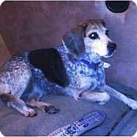 Adopt A Pet :: Jillie - Phoenix, AZ