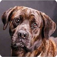Adopt A Pet :: belinda - Pembroke pInes, FL