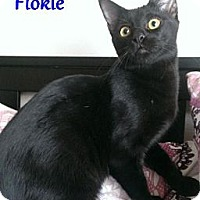 Adopt A Pet :: Flokie - Chandler, AZ