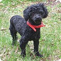 Adopt A Pet :: Mabel - Mocksville, NC