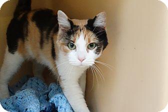 Calico Cat for adoption in Elyria, Ohio - Dakota