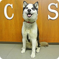 Adopt A Pet :: Bianca - Ashland, OR