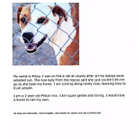 Pit Bull Terrier Mix Dog for adoption in Phoenix, Arizona - Missy