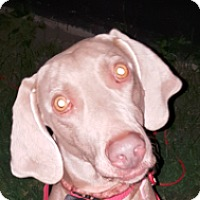 Adopt A Pet :: Baylee - Grand Haven, MI