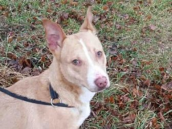 Terrier (Unknown Type, Medium) Mix Dog for adoption in Rogers, Arkansas - JERRY