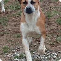Adopt A Pet :: Hershey - Bakersville, NC