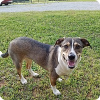 Adopt A Pet :: Ruby - Woodstock, GA