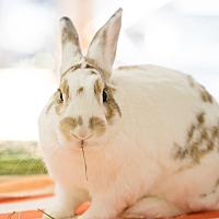 Adopt A Pet :: Gregory - Montclair, CA