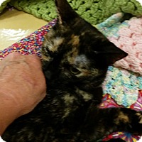 Adopt A Pet :: Ruby (in CT) - East Hartford, CT