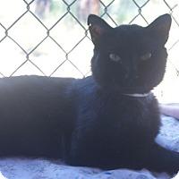 Adopt A Pet :: Binx - Libby, MT