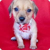 Adopt A Pet :: Jo - Irvine, CA
