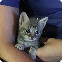 Adopt A Pet :: Kiefer - Wilmore, KY