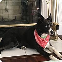 Adopt A Pet :: Dixie - Charleston, SC