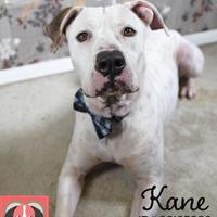 Adopt A Pet :: Kane - Gulfport, MS