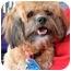 Photo 2 - Poodle (Miniature)/Shih Tzu Mix Dog for adoption in Vista, California - Kip
