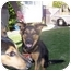 Photo 1 - Shepherd (Unknown Type) Mix Dog for adoption in Malibu, California - BONO and BILLY RAY