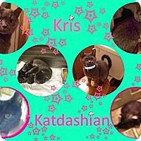Adopt A Pet :: Kris Katdashian - Washington, DC