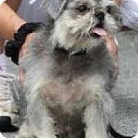Adopt A Pet :: Tinkle and Lucky ($400 for the - Staunton, VA