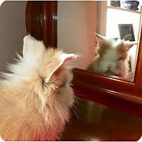 Adopt A Pet :: Aslan - North Gower, ON