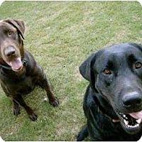 Adopt A Pet :: Tatonka - Altmonte Springs, FL